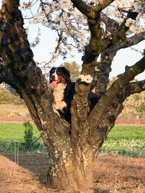 Lourse grimpe aux arbres