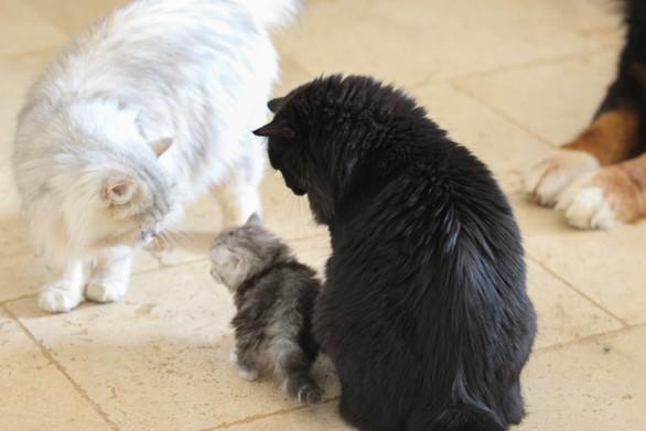 Miss et Sissi rassurent un chaton