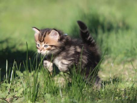 Envie d'adopter un chaton ?