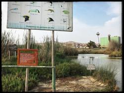 pantanos.villa - 9