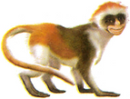 Amy the Monkey 2.png