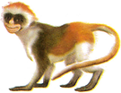 Amy the Monkey.png