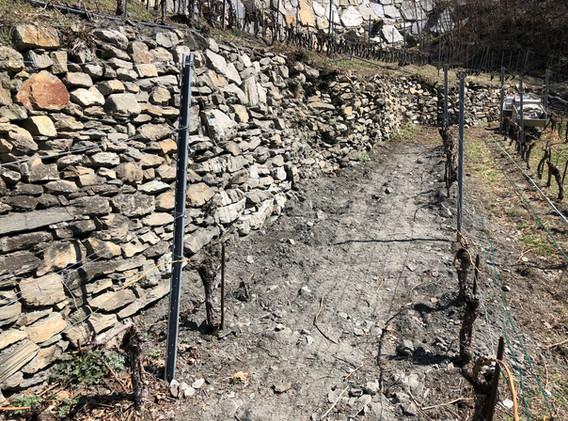 Wiederinstandstellung Rebmauern Toppi (2018)