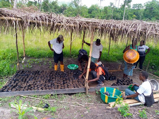 Permaculture and Environmental Activities Report