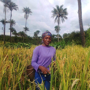 Underlining Causes and Strategies to Improve Agricultural Food Production in Liberia