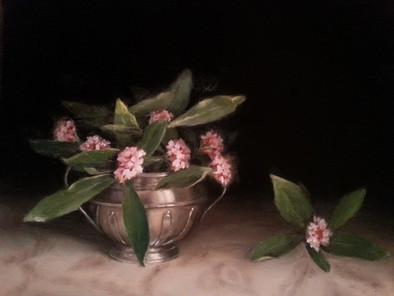 Daphne in sugar bowl