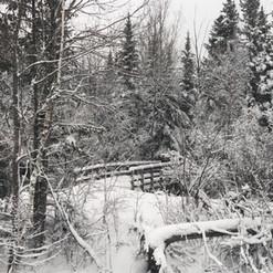 7. View of Backyard.jpg