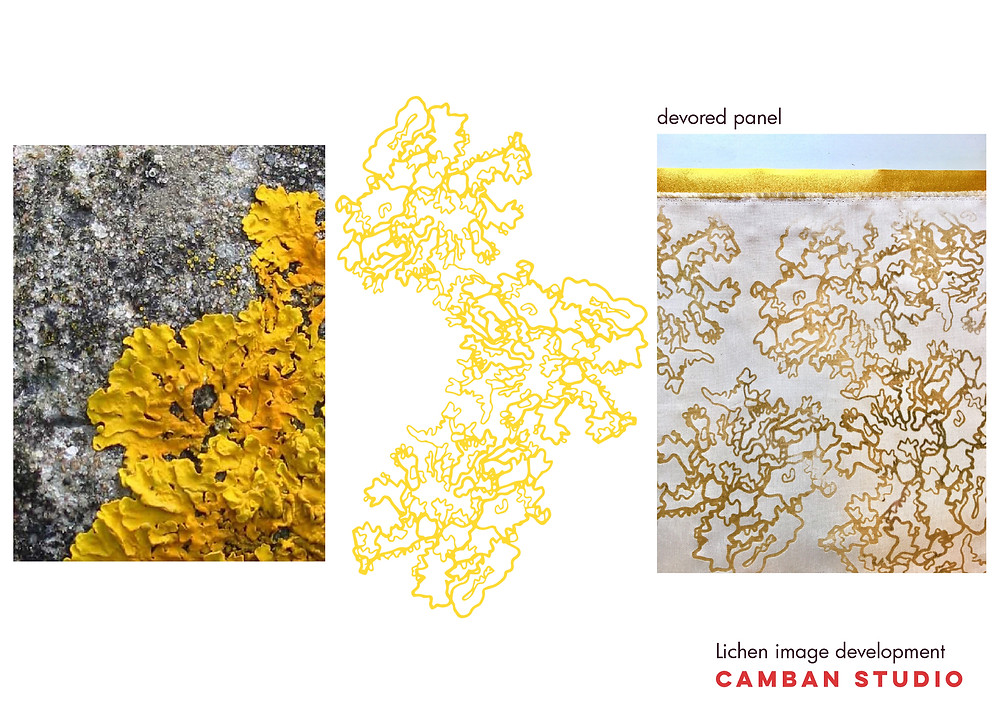 Camban Studio Lichen Image Development