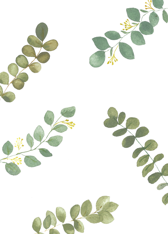 Eucalyptus / Freelance project