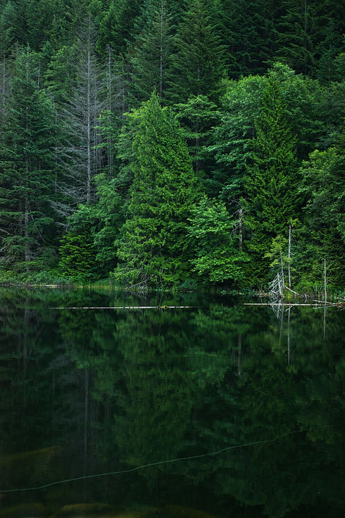 Looking at a dense forest mirrored by a lake.