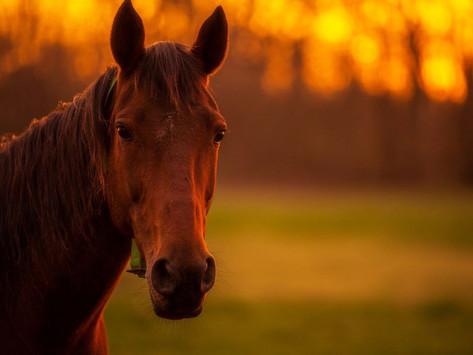 Life and Horseback Riding
