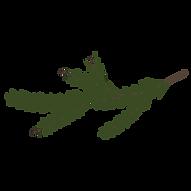 Kiefer Fichte Zweige 7