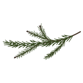 Las ramas de pino Spruce 7