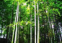 Bamboobee Bamboo