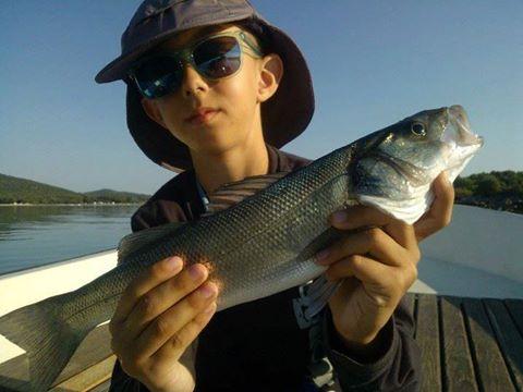 Timo ribič