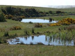 Nature Reserve Ponds