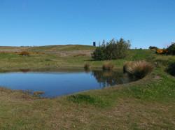 Pond looking North