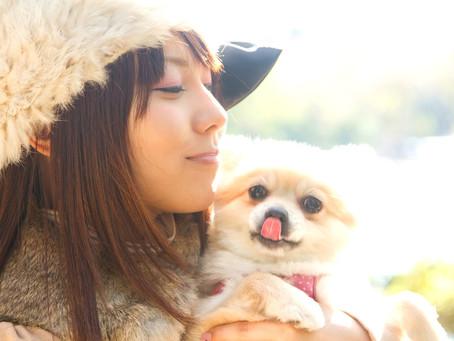愛犬を亡くしたら〜次の犬を迎えるかを考えてみた-ドッグサロンfuca店長ブログ【DOG WEB〜風花通信】より