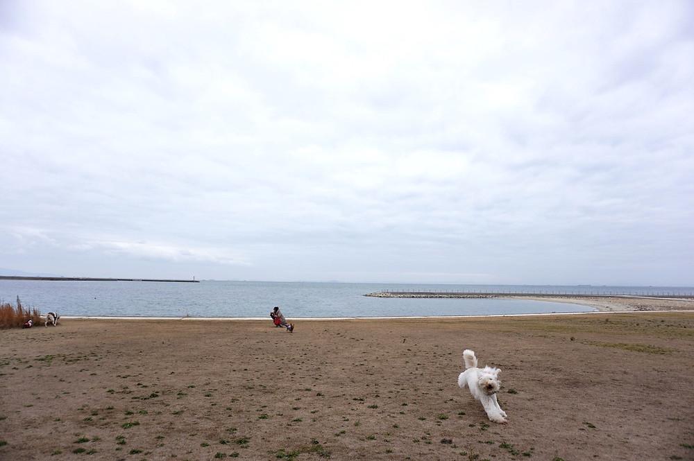 愛犬家にオススメ〜淡路島の遊べる穴場スポット