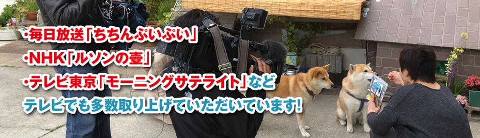 犬おやつ 猫おやつ bau-bau バウバウ テレビ取材