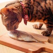 天然・国産・無添加・無着色・天日干し bau-bau 猫おやつ 祝い鯛を食べる猫