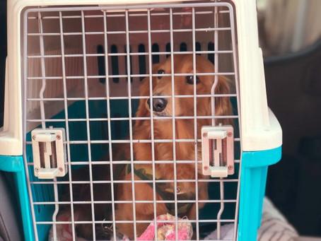 ペットキャリー〜入るのを嫌がる愛犬を上手に入れる方法と選び方-ドッグサロンfuca店長ブログ【DOG WEB〜風花通信】より