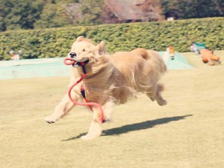 驚いた司法判断〜大型犬を飼うということ-ドッグサロンfuca店長ブログ【DOG WEB〜風花通信】より