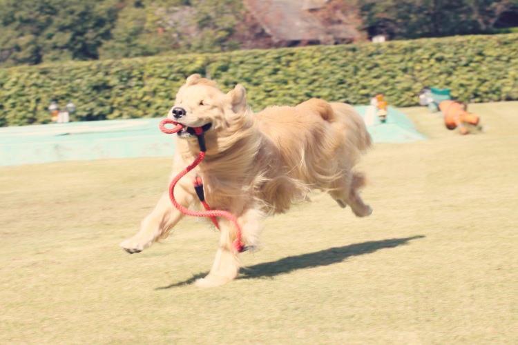 嬉しくて興奮状態になり走り回る犬