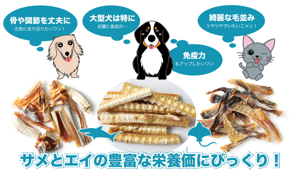 bau-bauの犬のおやつ 猫のおやつ サメとエイの栄養価