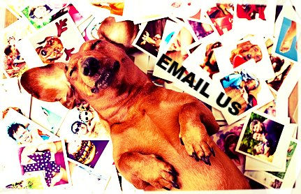 Dog Rolling in Mail