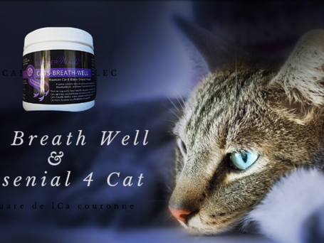 Is Wet Food Better Than Dry Food For Cats?