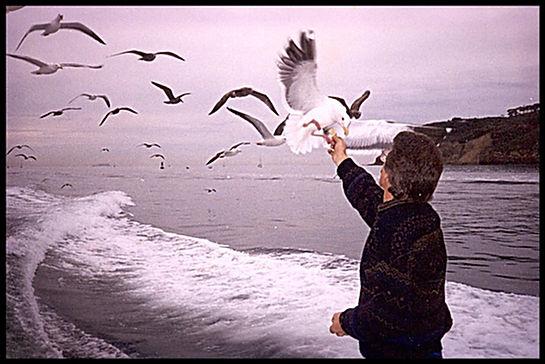 Bruce Sutton Feeding Seaguls