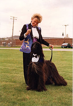 Afghan Hound and Handler In TUX