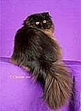 Remington Champion Black Persian