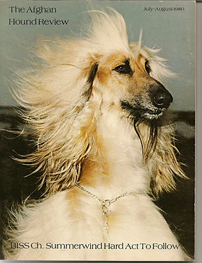 Afghan Hound Review Cover, SBIS CH Summerwinds Hard Act To Follow