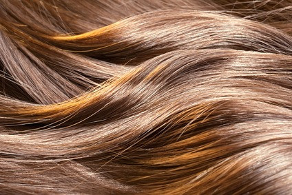 Anatomy of Hair and Your Pet's Coat