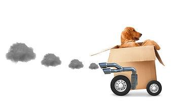 Golen Dog in Shipping Cart