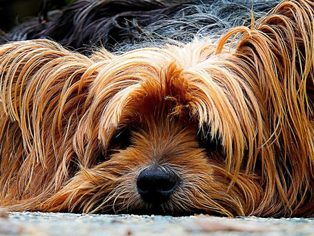Healthy pets from the inside out. Skin can alert us about our animal's health