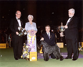 Kerry Blue Terrier BIS Winner Westminster