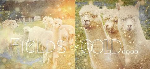 Rosebud Alpacas, Alpaca Yoga, Devon, Crystals, Fields of Gold, Workshop