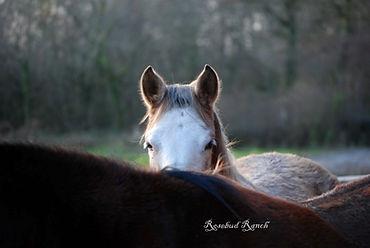 Rosebud Alpacas, Alpaca Yoga, Devon, Mustang, Horse