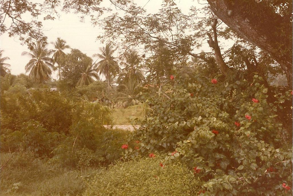 Gardens on Penang Hill 1985