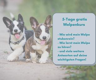 Kopie von Welpenkurs Online.png