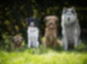 dogs-4189517_1920.jpg