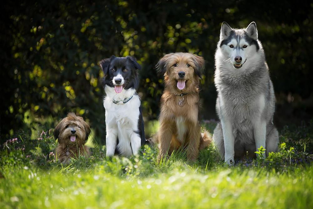 Jeder Hund - egal welcher Größe oder Rasse - kann ohne Gewalt erzogen werden und mit einem vertrauensvollen, auf positiver Verstärkung beruhendem Training, zu einem angenehmen Begleiter im Alltag werden! Gewalt ist im Hundetraining in jeder Situation abzulehnen!