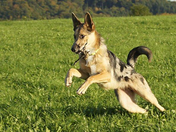Hundetraining mit positiver Belohnung - hier in Form von Spielen