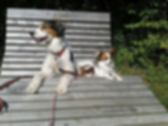 Hundetaining,Grunderziehung