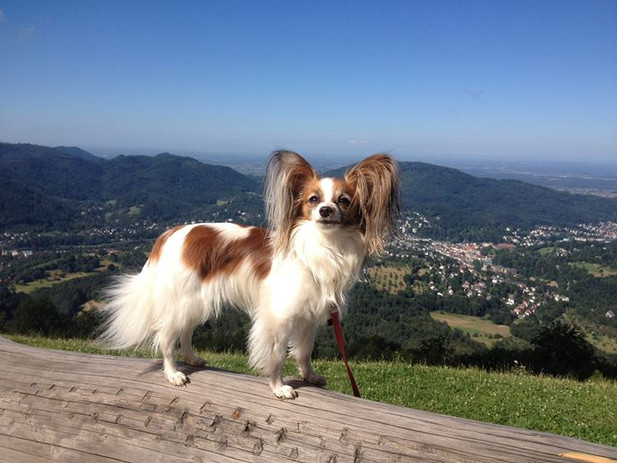 Mobiles Hundetraining