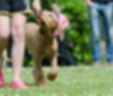 dog-school-672719_1920_edited.jpg