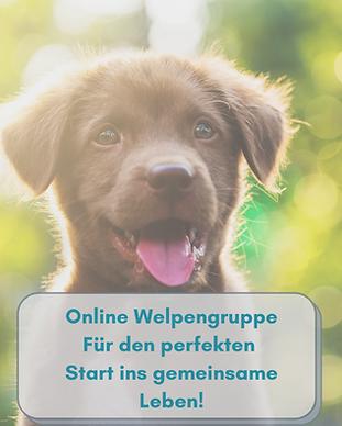 Kopie von Welpenkurs Online(2).png